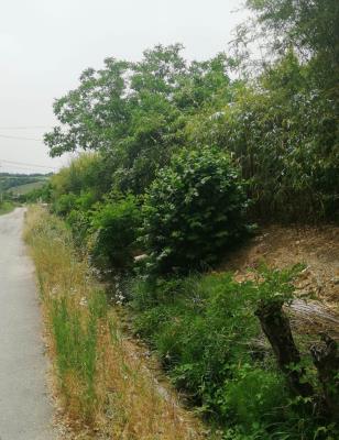 Rio Bertone